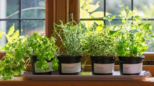 image 2 _ herbs on a shelf