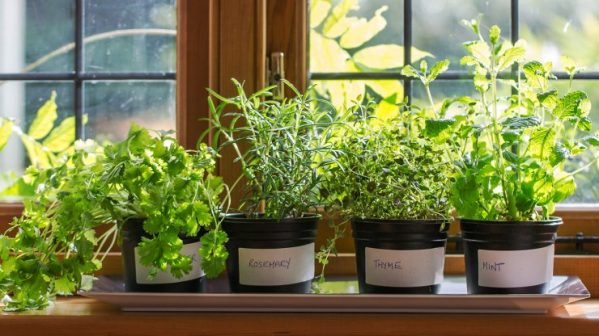 image 2 _ herbs on a shelf